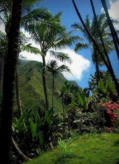 Tropical Paradise, Hawaii.