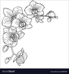 Beautiful monochrome with Royalty Free Vector Image - Idée tatouage - Orchidee Orchid Drawing, Rose Drawing Tattoo, Drawing Drawing, Flower Sketches, Art Sketches, Art Drawings, Free Vector Images, Vector Free, Orchid Tattoo