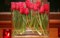 beautiful tulip arrangement