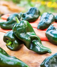 Poblano pepper plants produce thick-walled, mildy hot peppers also known as Ancho peppers.