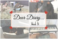 We Adopted A Puppy! | Dear Diary Week 51. - Beauty-Blush