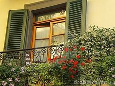 Tuscany  window with shutters and flowers   on a Tuscan    street  in Lucca  Italy