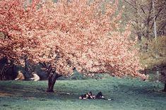 Ernst Haas, Central Park, Spring, 1970
