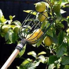 Fruit Picker #lisaellisgardens #gardengifts #picker #designergardengifts #onlineandinstore #lovegardening  https://lisaellisgardens.com.au/shop/product-category/tools/