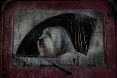 Burt - Martin Usborne - The Silence of Dogs in Cars