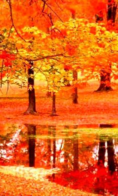 Beautiful Maple Trees in Autumn - Landscape Wallpapers Details