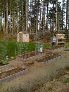 This is what I want to do in the garden for my tomatoes  cucumbers  peas...love the trellis'
