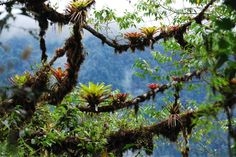 「andes cloud forest」の画像検索結果