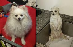 Before and after bath pose http://ift.tt/2mvQ6HH