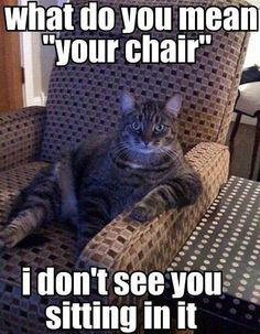 Funny cat - What do you mean your chair