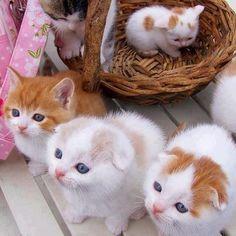 Chi scegliere? #Kitty #Cats #gattini