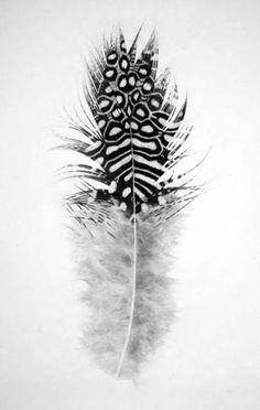 Jonathan Delafield Cook. Feather II, charcoal on paper.