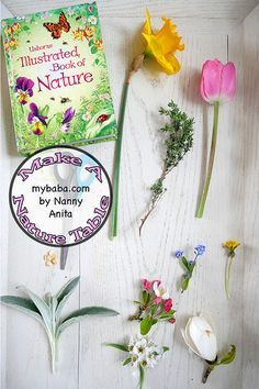 Head outside and find some interesting things to fill up a nature table with. A great activity for children of all ages to discover about plants. Outside Activities, Stem Activities, Educational Activities, Activities For Kids, Things To Do Inside, Fun Things, Daycares, Nature Table, Pre School