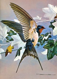 Swallow by Basil Ede (b.1931)