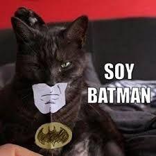 Spanish Cat Memes Google Search Cat Memes Funny Cats Animal Memes