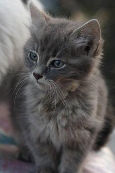 The beauty kitten