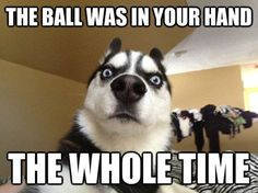 Dogs Archives « Page 8 of 36 « LOL, DAMN!