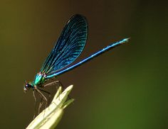Dragonfly Delight: Superb Macrophotography ~ The Ark In Space