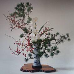 いけばなカレンダー1月 松、梅もどき、胡蝶蘭 Pine,Japanese winterberry,phalaenopsis #ikebana #flower #january #いけばな #小原流 #小原宏貴 #1月