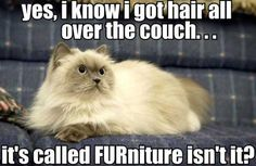 Hairy Furniture…
