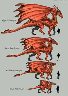 Another Sheet of the Red Dragon. it´s not the last. Here the Scales from the Smallest (Youngest) to the Hughest (Oldest) Working Time: Scrap: until. Dnd Dragons, Types Of Dragons, Red Dragon, Dragon Artwork, Dragon Pictures, Fantasy Monster, Mythical Creatures Art