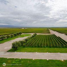 Depois de passear por lindas obras de arte e degustar ótimos vinhos na @bodegamonteviejo em #Mendoza é hora de curtir a maravilhosa vista panorâmica do Valle de Uco e da Cordilheira dos Andes. - - - - - - - - - - - - - - - - - - -  #ValleDeUco #Monteviejo #ComerDormirViajar #Bodega #Argentina #CDVTripMendoza #CDVTripMonteviejo #ArgentinaEsTuMundo #argentina #argentina_ig #argentina360 #argentinaig #VisitArgentina #argentinatravel #WorldFriendly #inprotur #vendimia #mendozaargentina…