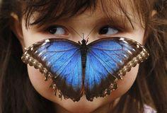 Dos mariposas :)