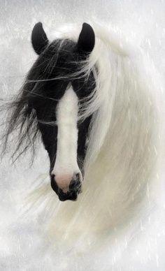 gorgeous black & white horse