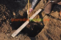 Plantar, Fruit Trees, Grape Vines, Garden Tools, Organic, Gardening, Paradis, Projects, Ideas