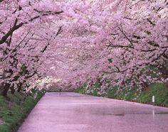 弘前城のお堀の桜 (c)Image Eye/orion