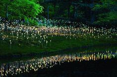 Bruce Munro Light Art in Cheekwood Botanical Garden