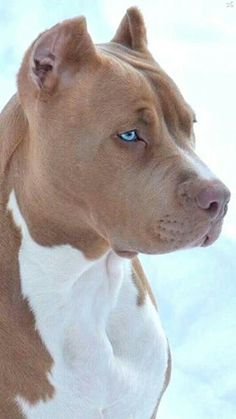 Medium Sized Dogs Breeds, Dog Breeds, Pitbulls, Pup, Heaven, River, Friends, Nature, Puppy Pictures