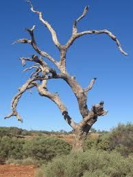 Image result for dead tree