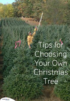 Tips for Choosing a Tree at a Christmas Tree Farm | ExploreAsheville.com #christmas #holidays #tree #diy #asheville