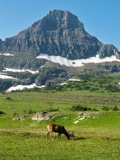 Glacier National Park: a must experience national park