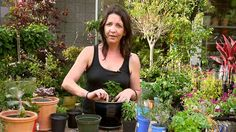 Sprout Home - How to Plant and Care for Herbs