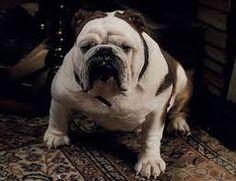 dog sherlock holmes - Buscar con Google