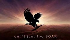I will always soar! Forever Aloe, My Forever, Best Home Based Business, Forever Living Business, Forever Living Products, Dream Big, Aloe Vera, Bald Eagle, Dreaming Of You