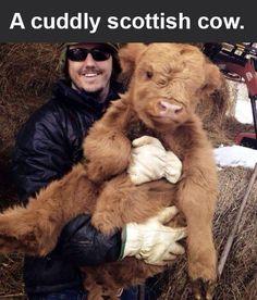 A cuddly fluffy milk horse.