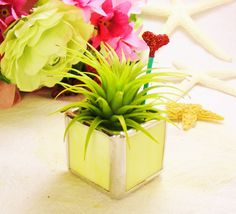 Mothers Day Yellow Stained Glass Tillandsia Air by MoreThanColors, $18.00