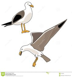 seagulls illustrations - Google Search