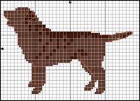 Labrador Retriever (chokladbrun)
