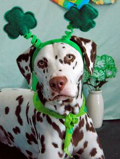 3 leaf clover dog via 25 Ridiculously Cute St. Patrick's Day Pets