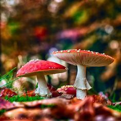 Fungi l Plant Life