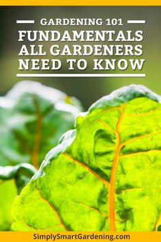 New to gardening? My Gardening 101 series shares everything you need to know to get started. You'll get help with deciding what to plant, where to put your garden, and what you'll need to grow a beautiful garden. Learn how to grow your dream vegetable gar
