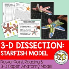 This 3-D starfish or seastar dissection anatomy model can be used as a dissection-free starfish exploration, a pre-dissection study tool, or even as a summative assessment for comparative anatomy. Students will be able to identify and explain the structure and function of the internal and external anatomy of the starfish.