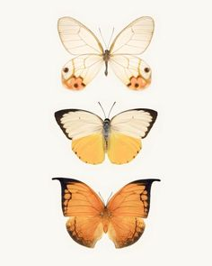 Orange Butterflies fine art photography print by Allison Trentelman | rockytopprintshop.etsy.com