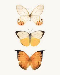 Orange Butterflies fine art photography print by Allison Trentelman | rockytopprintshop.etsy.com