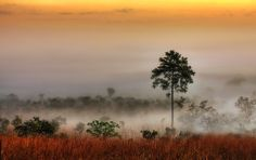 The Last Stand | Thung Salaeng Luang National Park | Thailand | Photo By Thanes G.
