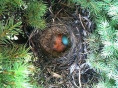 Another birdie hatched!         5-21-13
